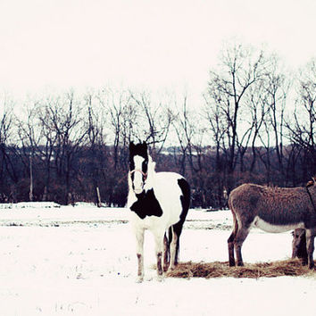 horse, winter, snow, country, fine art photography