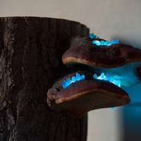 Night sky wooden lamp - Mushroom lamp - Glowing apatite crystal mineral - Specimen 02 - Shroom in the Room