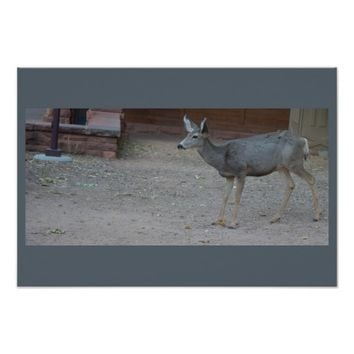 Deer Zion National Park Poster