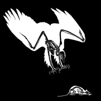 Skeleton Eagle Art Print. LIMITED EDITION / SQUARE original animal art illustration. skull black and white poster wall artwork punk gothic