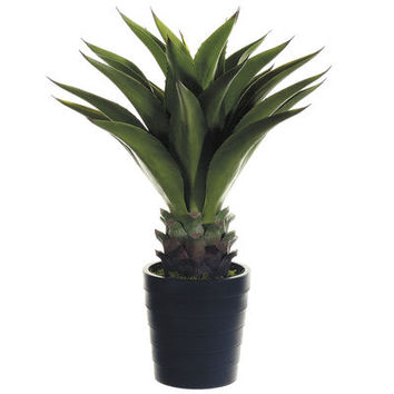 Faux Agave Attenuata Plant in Black Pot