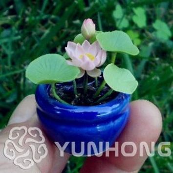 Mix Mini  Perennial Flowers bonsai Many colors lotus plant Teach you plant the Lotus, 10 pieces Water Lily plant