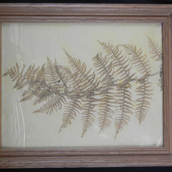 Pressed Fern Leaf, Dried Botanical in Oak Frame