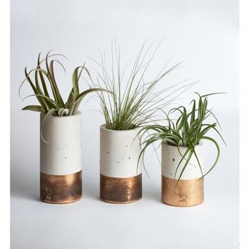 Bayley Cylinder Planters with Air Plant, Bronze Dipped (Set of 3)