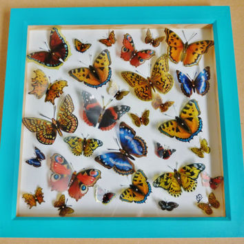 British Butterfly Collection - Faux Taxidermy