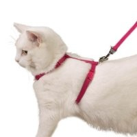 Savvy Tabby Nylon Cat Harness, 3/8-Inch, Raspberry Sorbet