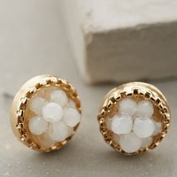 Nidus Posts by Anthropologie Ivory One Size Earrings