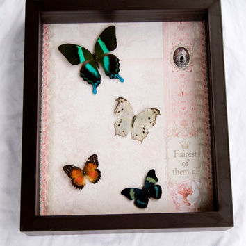 FREE SHIPPING  Real Butterflies Encased in 16X14X3.5 in Shadow Box with Cameo