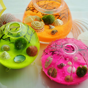 Marimo Moss Ball Aquatic Terrarium ~ Japanese Moss Ball ~ Neon Sand ~ Sea Shells ~ Seafan Branch ~ 3 Glass Vase Choices ~ Gift Idea