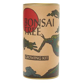 The Jonsteen Company Bonsai Tree (Japanese Maple) | Seed Grow Kit