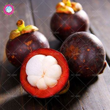 20pcs Mangosteen seeds Garcinia mangostana tree seeds Fruit queen high nutritional value Delicious fruit seeds for home plants