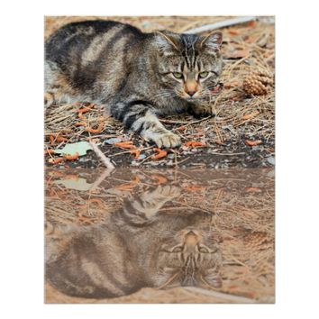 Cat starring, Value Poster Paper (Matte)