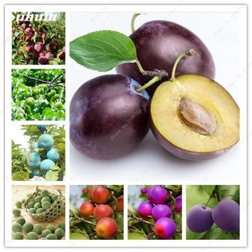 5 Pcs/Bag Direct Tree Plum Tree Seed Tender And Mouthwatering Varieties Complete Delicious Sweet Fruit Seeds Gift To Kids