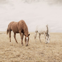 Rugged Country Photograph Horse Photo Size 8x12 by ApplesAndOats