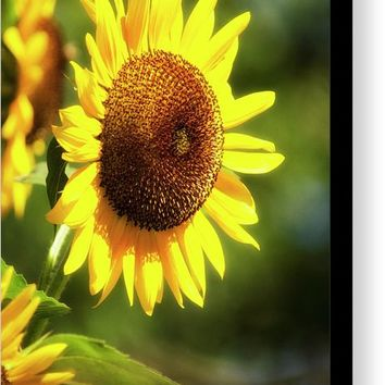 Sunflower Field Canvas Print