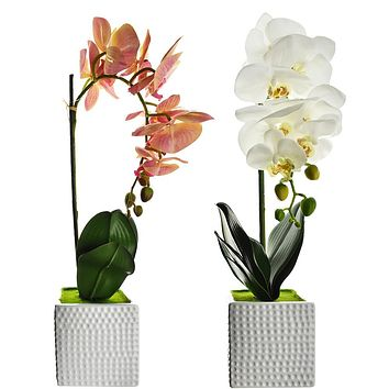 Artificial Moth Orchid with Square Pot, 20-Inch