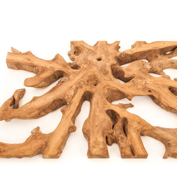 Teak Root Cross-Section Wall Decor - Large