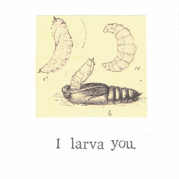 I Larva You Insect Pun Card Love Biology Humor Funny Nerdy Valentine's Day Biology Science Vintage Nature Natural History