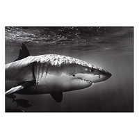 White Shark Profile | Canvas | Art-by-type | Art | Z Gallerie