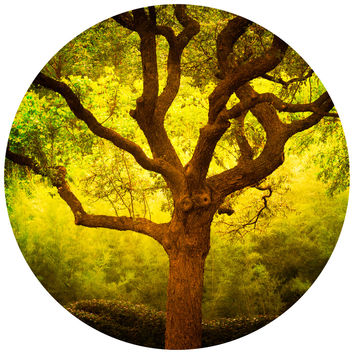 Paul Moore's Tree of Life Cantigney Park, IL Circle wall decal