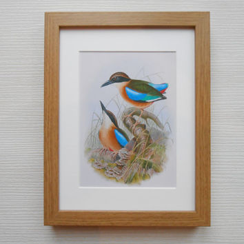 34 - Print with frame, John Gould, Birds lover,  Home decor, Art, Art print, Beautiful art, Birds print, Best friend present, Birds pictures