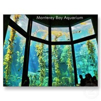 Monterey Bay Aquarium Postcard from Zazzle.com