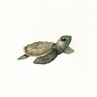 Green Baby Loggerhead Turtle/Watercolor Print/ 8.5x11