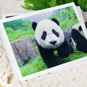 6 pcs in one, Postcard,panda,Animal,national treasure of china,Christmas Postcards Greeting Birthday Message Cards 10.2x14.2cm