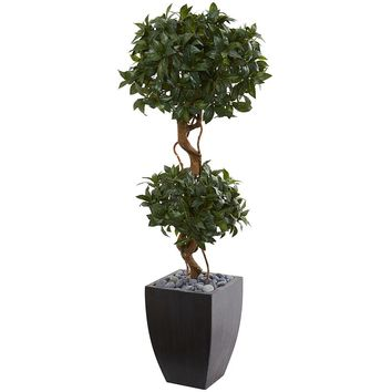 Artificial Silk Tree -4.5 Ft Sweet Bay Double Topiary Tree In Black Wash Planter