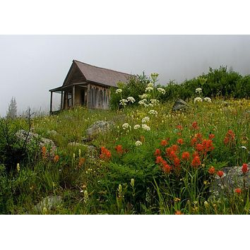 Cabin and Wildflowers, Animas Forks, Colorado Wall Art Print - Many Sizes
