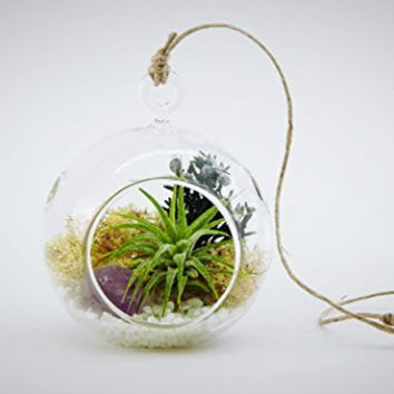 "Bliss Gardens Mini Air Plant Terrarium Kit with 3"" Round Glass, Purple Amethyst / Mini Shabby Chic Round"