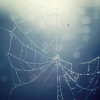 Spider's Web, Nature Photography, Blue, Garden, Nature, Dew Water Drops - Morning Garland