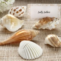 Authentic Shell Place Card Holders (Set of 6)