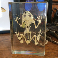 Toad Skeleton Paperweight
