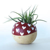 Air Plant Planter with Air Plant. Red with White Hearts. Valentine's Day Gift. Airplant Planter Pod Terrarium. Red hearts. Mother's Day Gift