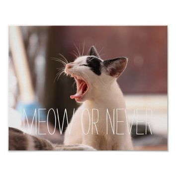 Funny Meow or never cute kitten kitty cat lover Poster