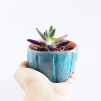 Terracotta Ceramic Planter - Ceramics and Pottery - Succulent Planter