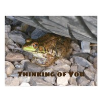Frog under Tire Thinking of You Postcard