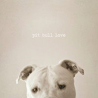 $19.00 Pit bull love  Art Print by Laura Ruth  | Society6