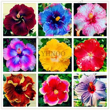100pcs/bag Giant Hibiscus Flower Seeds Garden & Home Perennial Potted Plants Flower happy farm Hibiscus Bonsai seed