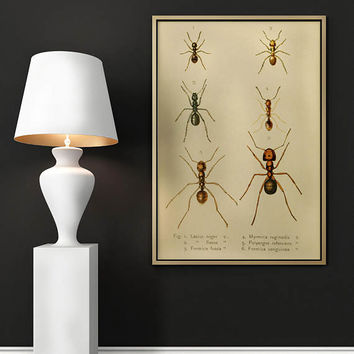 Ant Poster| Vintage Ant Science Print| Insects| Wall Decor Insects Poster| Wasp| Ant Wall Art Print| Vintage Wall Art| Ant Science| HAP022