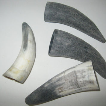 4 Cow horn tips...E4A69....Natural colored raw  cow horns...........ox horns