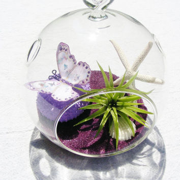 Sea Urchin with Butterly Glass Globe Hanging Terrarium Kit with Tillandsia  Air Plant