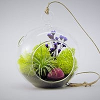 Small Air Plant Terrarium Kit / Enchanted Forest Teardrop, Round or Both ~You Pick