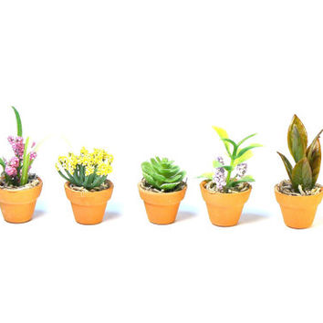 Set of 5 Fairy Garden Dollhouse Miniatures Plants in Clay Pots