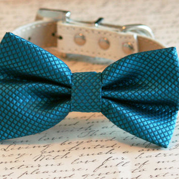 Royal Blue bow tie attached to leather dog collar, Chic Dog Bow tie, Pet Wedding Accessories, 2014 Wedding Accessories