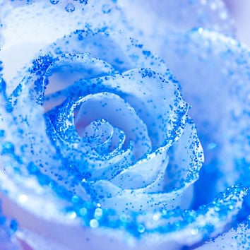 Elsa Blue Glitter Rose Wall Art | Frozen Children's Bedroom Photography Decor