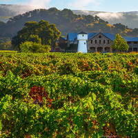 Wine Country Print, Napa Valley Print, California Print, Sonoma Print, Fine Art, Canvas Gallery Wrap, Winery, Matted Wall Prints, Wall Decor