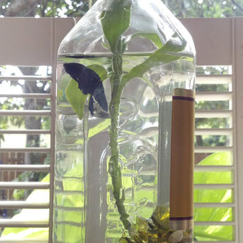 Jose Cuervo Tequila/ Fish Bowl / Betta Bottle Habitat/ Sea Glass/ Aquatic Bamboo/ Mondo Grass