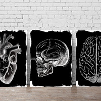 Instant download art, body collection, human heart, skull and brain, black and white art, wall art, vintage illustration prints, medical art